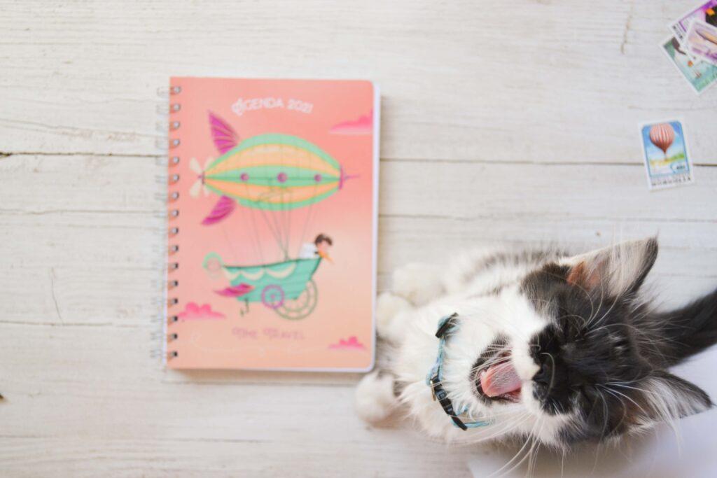 Agenda 2021 gatto